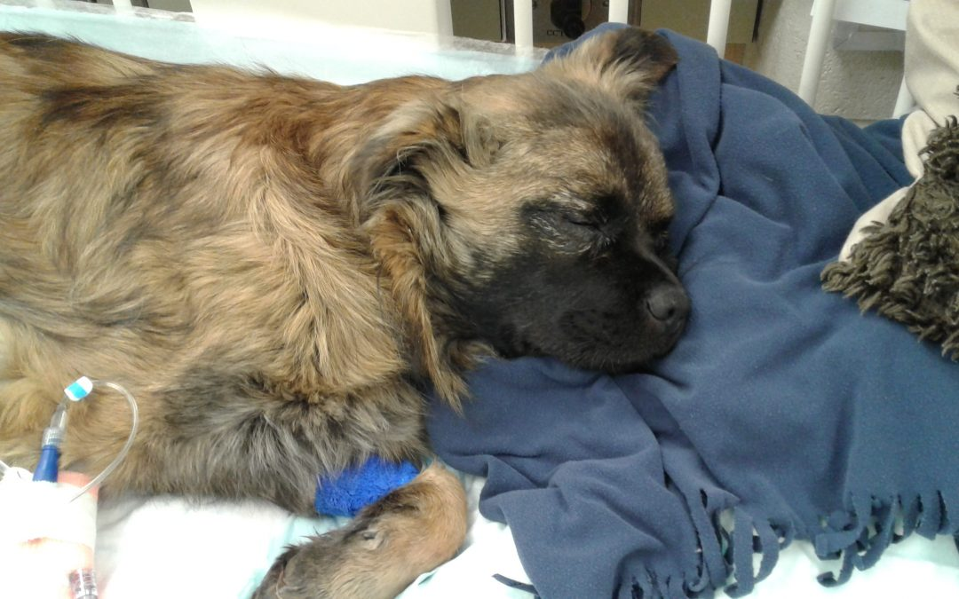 Home At Last Dog Rescue Bc