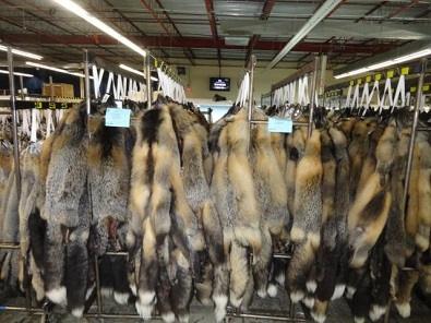 North West Company announces new partnership to continue buying trappers furs