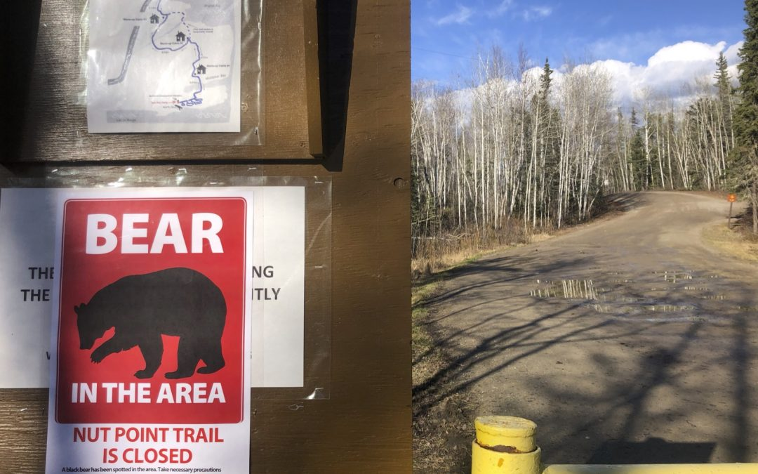 Nut Point Trail closed after bear sighting