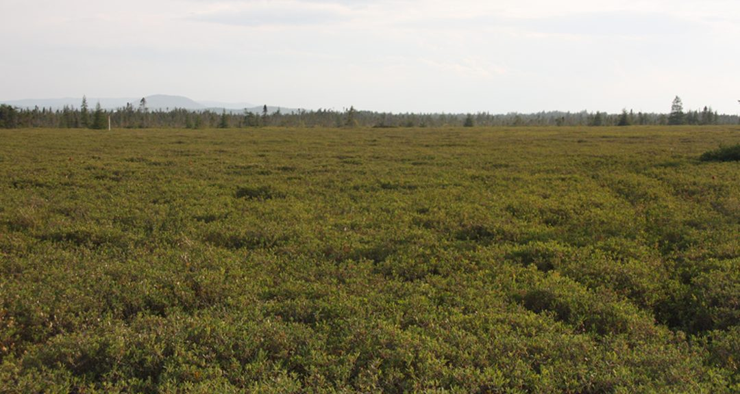 Opposition increases to proposed peat moss harvesting project south of La Ronge