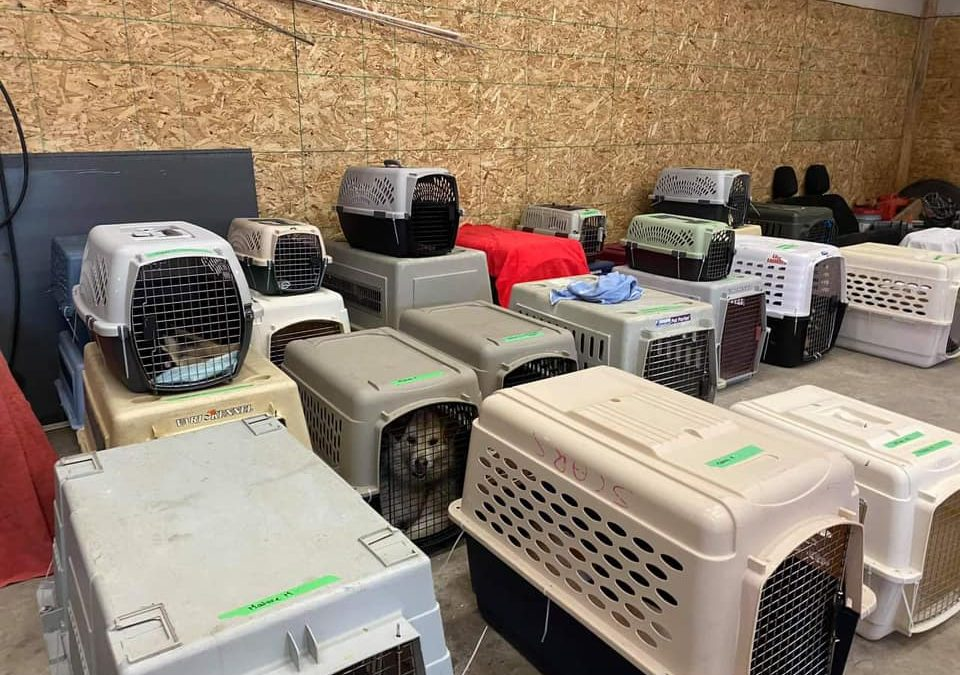 Northern village teams up with rescue organization to help stray animals