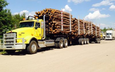 Sask. forestry industry sees record sales and potential for increased growth
